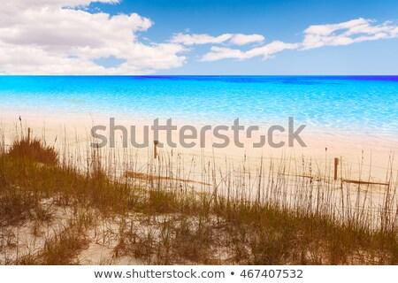 ビーチ フロリダ 公園 米国 水 夏 ストックフォト © lunamarina