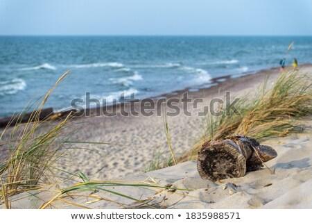 Driftwood plaży piasku niebo wody charakter Zdjęcia stock © Digifoodstock