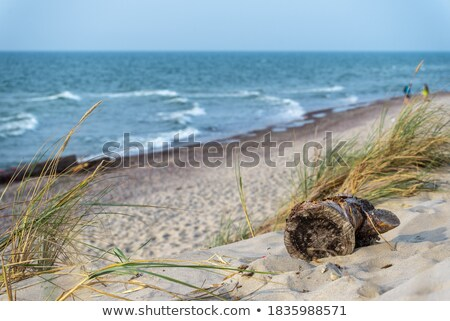 Troncos praia areia céu água natureza Foto stock © Digifoodstock