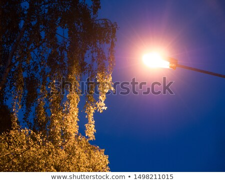 Birch trees lit by street lamps Stock photo © IS2