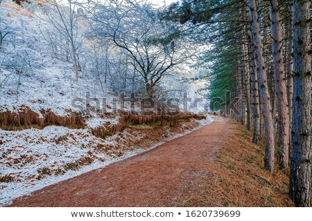 First snow in the city park  with a sunny walking alley Stock photo © artsvitlyna