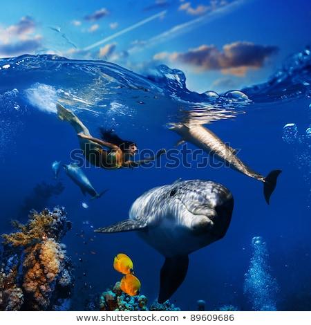 Mermaid with Dolphin Undersea Stock photo © AlienCat