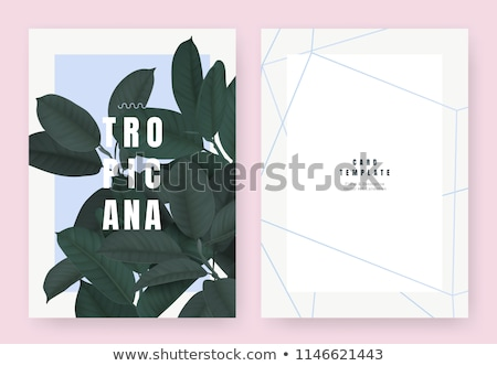 Rubber Fig Tree Leaf Tropical Vector Illustration Stock photo © robuart