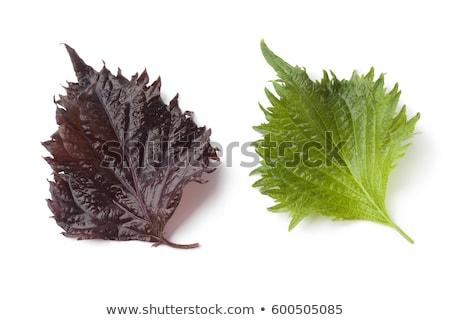 frescos · verde · hoja · blanco · familia · alimentos - foto stock © ungpaoman