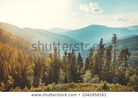 Peaceful blue mountain landscape scene background with pine trees, rolling hills, sun rising or sett Stock photo © jeff_hobrath