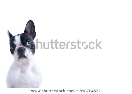 adorabile · gruppo · molti · singolare · cani · diverso - foto d'archivio © feedough