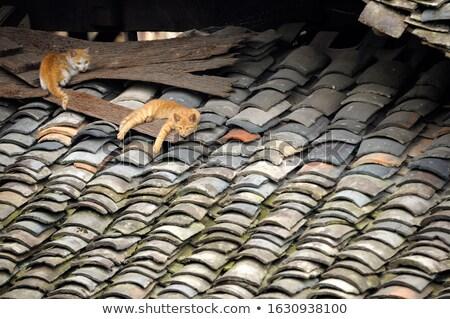 Kat dak chinese dorp traditioneel Stockfoto © Juhku