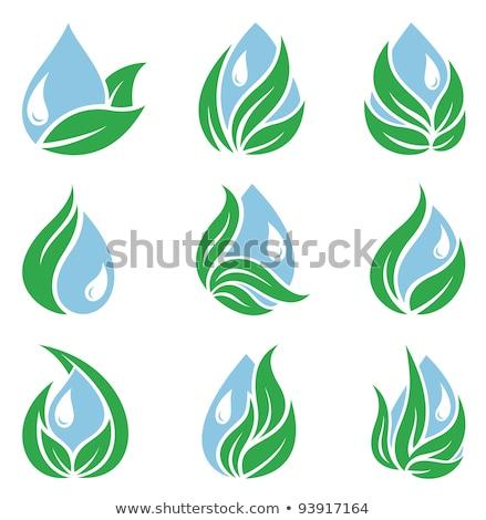 лист ряби красочный градиент икона Сток-фото © bspsupanut