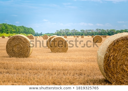 Big bales of straw Stock photo © nomadsoul1