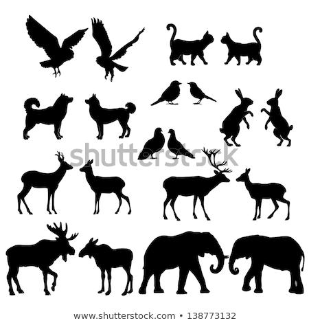 elefántok · vektor · végtelenített · textúra · stilizált · indiai - stock fotó © mayboro
