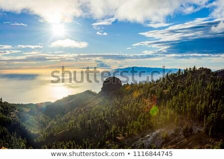 roślin · krajobraz · roślin · wieża · kamieni - zdjęcia stock © maridav