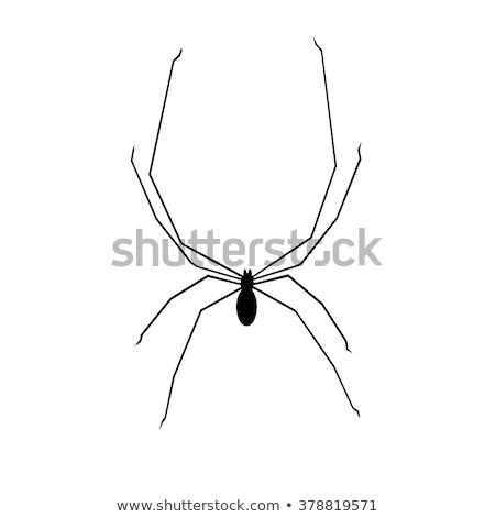 Tatuś pająk charakter błąd Zdjęcia stock © brm1949