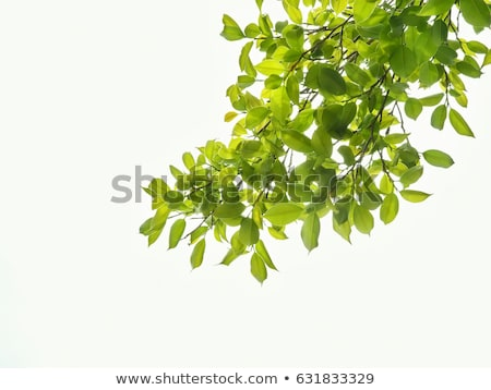 bark with ivy leaves stock photo © rbiedermann