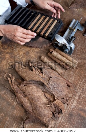 Tobacco leaves twisted in a cigar Stock photo © Olesha