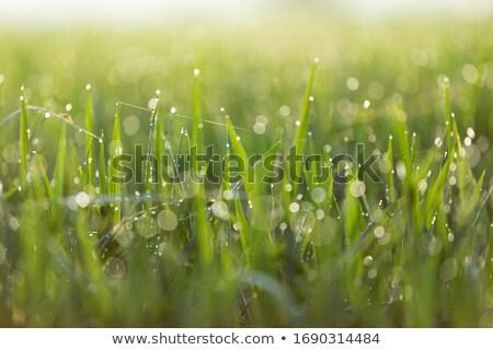 Friss harmat cseppek gyönyörű makró lövés Stock fotó © macropixel