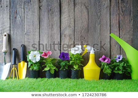vaso · isolado · branco · primavera · grama · natureza - foto stock © smithore