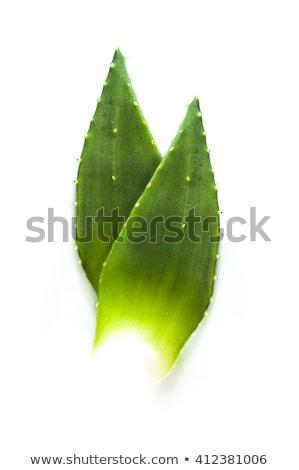 фотография алоэ листьев подробный свет здоровья Сток-фото © nenovbrothers