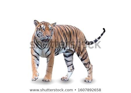macska · állat · menedék · feketefehér · fém - stock fotó © vetdoctor