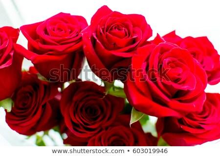 девять · красные · розы · изолированный · изображение · формат - Сток-фото © Miloushek