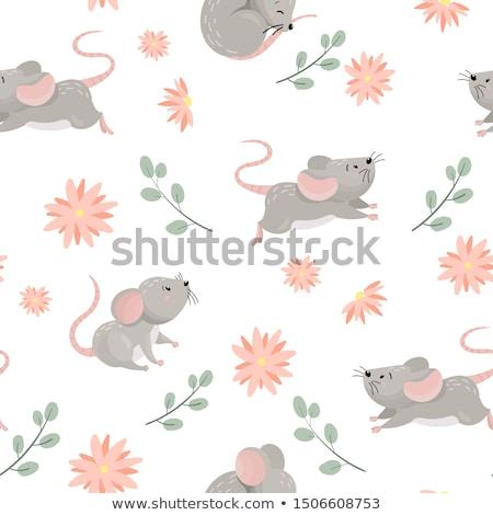 weinig · grijs · muis · geïsoleerd · witte · baby - stockfoto © natashika