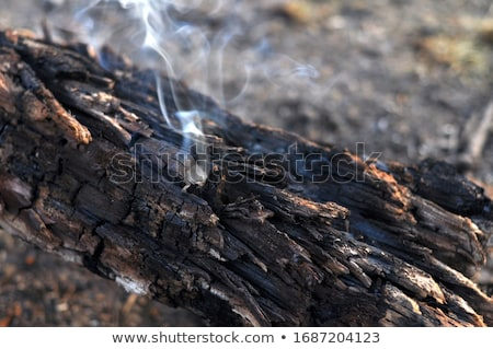 by forest fire damaged trees with black bark in the yosemite nat Stock photo © meinzahn