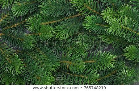 sosna · struktura · drewna · żółty · mech · grzyb · streszczenie - zdjęcia stock © nneirda