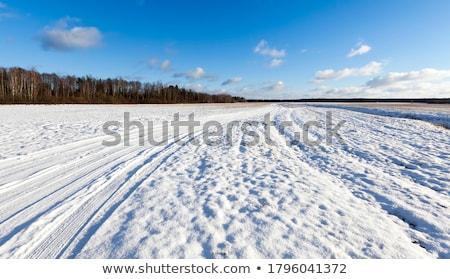 sneeuw · gedekt · boom · berk · hout - stockfoto © frankljr