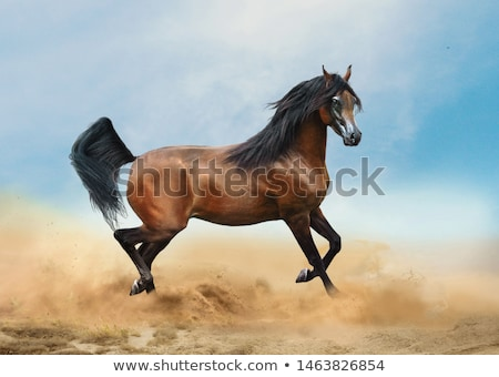 Arabian horses  Stock photo © meinzahn