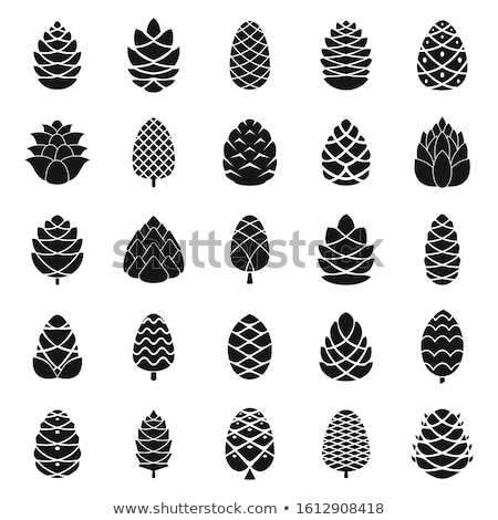 Cedro semente noz cone Foto stock © Elmiko