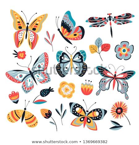 collection of stylized butterfly Stock photo © balasoiu