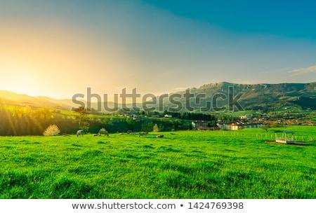 mucca · verde · estate · prato · offuscata · cielo - foto d'archivio © vwalakte