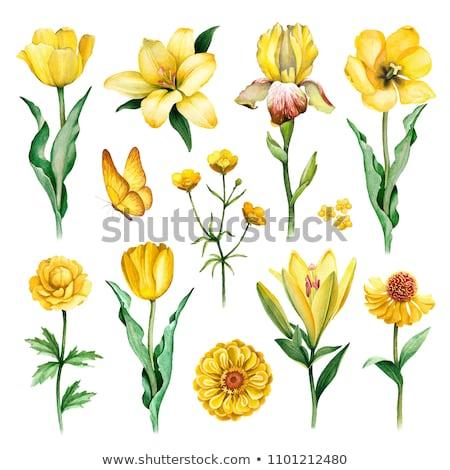 Motyl żółty kwiat naturalnych makro charakter Zdjęcia stock © Anterovium