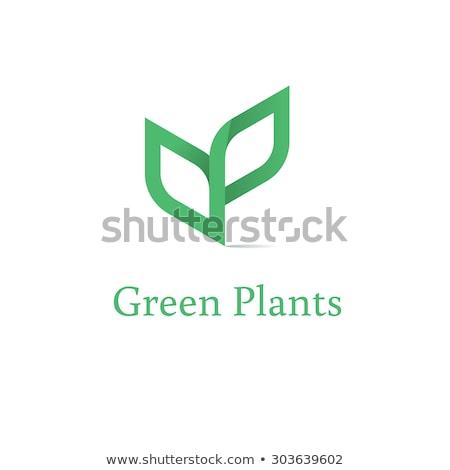 blad · logo · groeiend · boom · ontwerp · groene - stockfoto © fenton