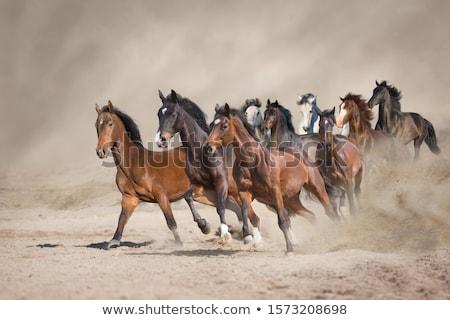 Foto stock: Rebanho · corrida · animais · veado · africano