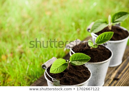 Small tree is in wooden flowerpot with wooden background. Stock photo © art9858