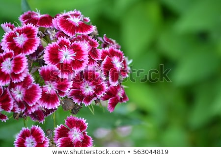 Bloemen witte bloem natuur glas tuin Stockfoto © haraldmuc
