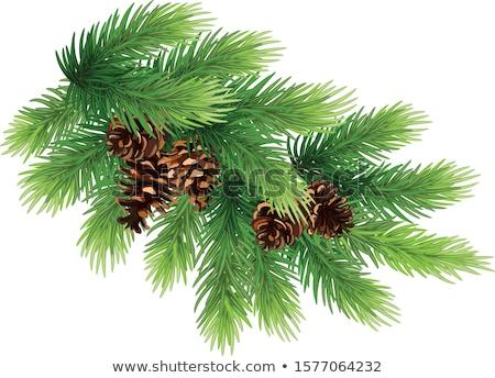 Weihnachten Fichte Niederlassungen Kiefer Spielzeug Neujahr Stock foto © Valeriy