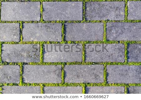 Macskakő fű kő zöld fű textúrák út Stock fotó © Taigi