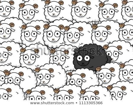 面白い 黒 羊 実例 白 動物 ストックフォト © adrenalina