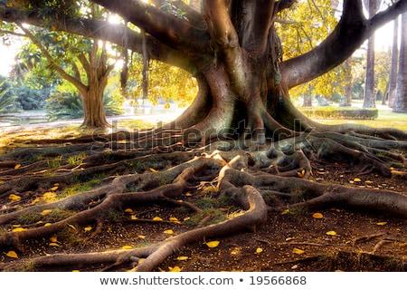 Zdjęcia stock: Kolorowy · wiosną · dąb · kory · tekstury · drzewo