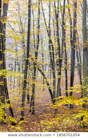forêt · arbre · herbe · nature · paysage · arbres - photo stock © kotenko