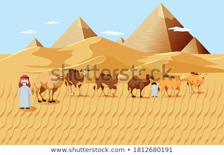 desert scene with pyramids and camels stock photo © bluering