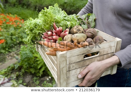 Abundance of fresh ripe vegetables Stock photo © dash