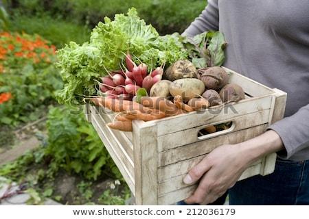 tarka · zöldségek · fa · asztal · szett · gyógynövények · fűszer - stock fotó © dash