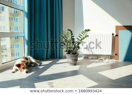 House inside Stock photo © biv