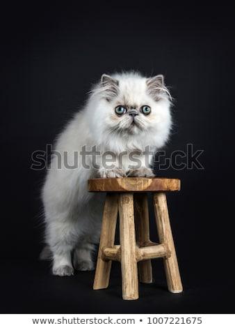 Kat kitten geïsoleerd zwarte leggen witte Stockfoto © CatchyImages