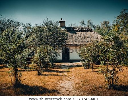 Paraszt ház tél vidéki táj fa fa Stock fotó © fanfo