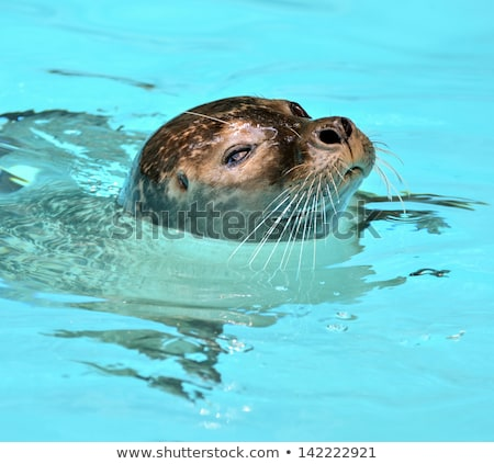 Bath with sea lion Stock photo © robStock