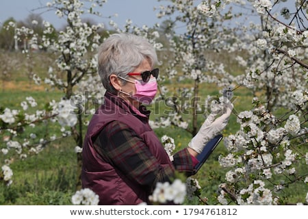 Farmer or agronomist in blossoming cherry orchard Stock photo © simazoran