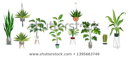 Collection of indoor house plants in pots. Home decorative and deciduous plants in a flat style. Iso Stock photo © designer_things